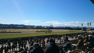 伊豆の競馬。。。  #競馬  #jorf